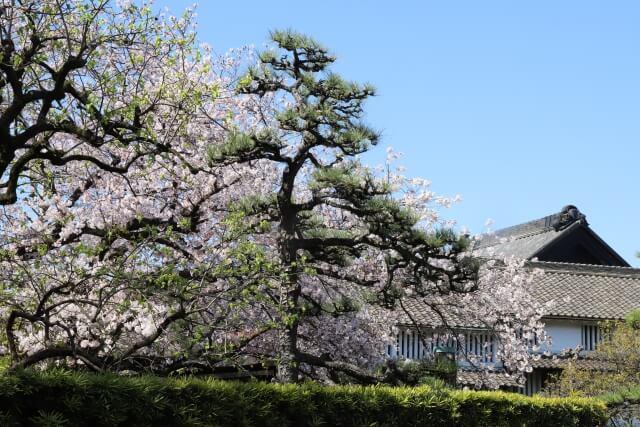 愛知県鳴海のテイクアウトスポット